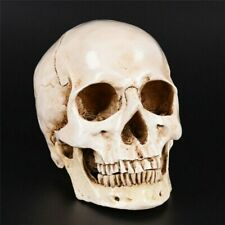More details for life size replica human skull realistic gothic halloween decor white resin uk