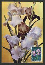 LUXEMBURG MK 1959 FLORA SCHWERTLILIE MAXIMUMKARTE CARTE MAXIMUM CARD MC CM d5676