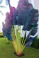100 Pcs Purple Palm Seeds Flores Bonsai Fan Palm Plants Evergreen Tree Garden
