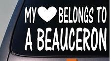 My heart belongs to a beauceron sticker decal *D901*