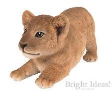 Vivid Arts - REAL LIFE ZOO ANIMALS - Playful Lion Cub