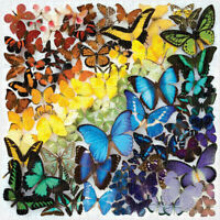 1000 Piece Adults Children Jigsaw Puzzles Household Colorful Butterfly Game
