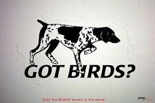 GOT BIRDS? GSP Pointing Pointer, Bird Dog DECAL