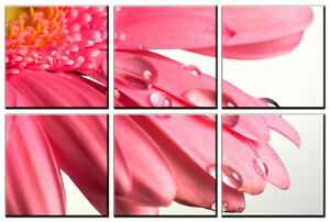 Dew Drops on Pink Flower Petals Photo on Canvas Wall Art Framed Ready to Hang