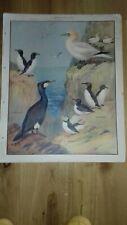 VINTAGE ADVERT MATCHES BIRDS JAPAN NEW FINE ART PRINT POSTER CC4742