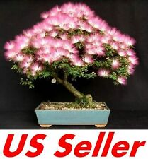 10 Pcs Mimosa Albizia Seeds F11, Julibrissin Exotic Flower Persian Silk Bonsai
