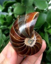 Natural Pearly Nautilus Fossils Ammonite Specimen From Madagascar