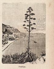 Stampa antica NAPOLI Veduta panoramica di Posillipo 1899 Old print