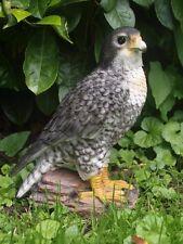 Falke lebensecht Wanderfalke Figur NEU Adler Greifvögel Habicht Dekoration 26cm