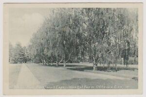 Canada postcard - Birch Avenue, Dominion Experimental Form, Ottawa (A249)