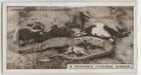 South Rhodesia Africa Python Snake Eating 1920s Trade Ad Card