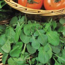 Suffolk Herbs - Organic Rocket Salad - 750 Seeds