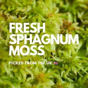 UK Sphagnum Moss for Plants, Carnivorous, Cuttings Air Plants Organic Fresh 90g