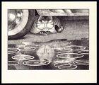 B Kliban Cats RAINY DAY CAT vintage funny cat art print