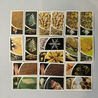 1981 Brooke Bond Tea  SMALL WONDERS under a microscope   Trading Lot of 18