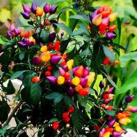 """50Pcs Ornamental Hot Pepper Seeds """"Prairie Fire"""" Edible Home Garden Plant Flower"""