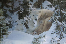 More details for steven townsend warmth of nature polar bears snow cubs winter ice, photo realism