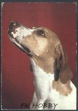 CPA Dog Hund Pies Cane Perro Chiene z657