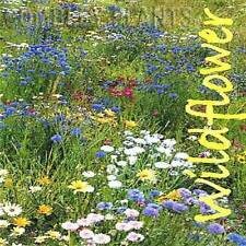 WILDFLOWER PERENNIAL MEADOW SEED MIX INC GRASS 8 GRAMS - wild flower seeds
