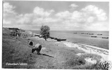 AK, Ostseebad Lubmin, Strandpartie mit Schafen, 1958