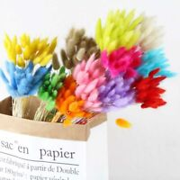30Pcslot Natural Dried Flower Colorful Bouquet for Home Rabbit Grass Tail Bunch,