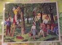 Affiche Set de table Pédagogique 42x30cm Cueillettes des Cerises dans la Drôme