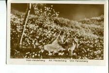 NORMA SHEARER & RAMON NOVARRO rare early ROSS VERLAG 1920s POSTCARD