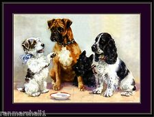 English Picture Scottish Terrier Boxer Cocker Spaniel Dogs Dog Puppy Art Poster