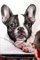 Ritratto portrait di FRENCH BULL DOG (dog) - Matite colorate cm. 50 x 60