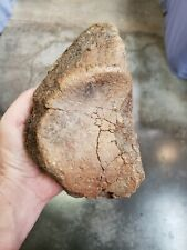 ICE AGE Woolly Mammoth bone fossil HEAVY preservation USA fossils MEGA FAUNA!!!!