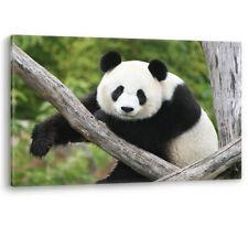 Panda Bear Black White Giant China Large Canvas Wall Art Picture Print A0 A2 A4