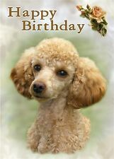 Poodle Dog Design A6 Textured Birthday Card BDPOODLE-15-Apricot by paws2print