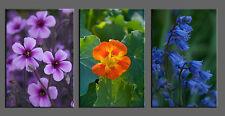 Nature Photo Giclee Canvas Gallery Wrap Triptych Art Floral Orange Blue Mauve