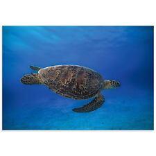 Sea Turtle Art Coastal Decor Sea Turtle Photography on Acrylic