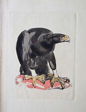 PAUL JOUVE GRAVURE ANIMALIERE ART DECO OISEAU RAPACE AIGLE ROYAL EAGLE