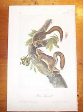 The Quadrupeds of North America. Audubon. Octavo ed. Hare Squirrel.
