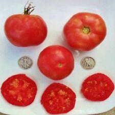 Burpee's Globe - Organic Heirloom Tomato Seeds - Perfect Slicer - 40 Seeds