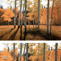 """36W""""x24H"""" GENTLE RISE by DOUGLAS AAGARD - AUTUMN TREES FOREST SHADOW CANVAS"""