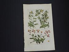 Sir John Hill, Botanical, The Vegetable System 1761-1775 White Weed #15