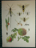 Vintage Natural Historia Estampado ~ Insectos Planta