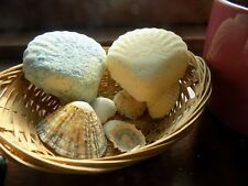 seashell bathbombs