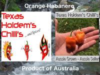 25x Orange Habanero Chilli Chili Seeds Fantastic Orange Hab Flavour ORGANIC