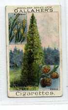 (Jc1889-100)  GALLAHERS,WOODLAND TREES,WELLINGTONIA TREE,1912#74