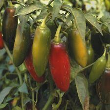 Pimienta Chile-Jalapeños - 100 semillas
