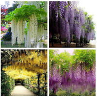 Hanging Silk Flower Floral Artificial Vine Wedding Bouquet Wisteria Home Decor w