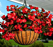 WAX BEGONIA - 1000 SEEDS - Begonia Semperflorens F2 - RED FLOWER DARKLEAVED