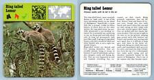 Ring-tailed Lemur - Mammals - 1970's Rencontre Safari Wildlife Card