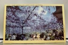 California CA Wisteria Sierra Madre Postcard Old Vintage Card View Standard Post