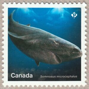 GREENLAND SHARK = Sharks in Canadian Waters = Stamp fr SS MNH Canada 2018 #3105d