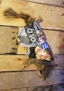 Chex mix fox squirrel Mount Taxidermy Decor novelty mount